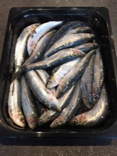 Sardines vers